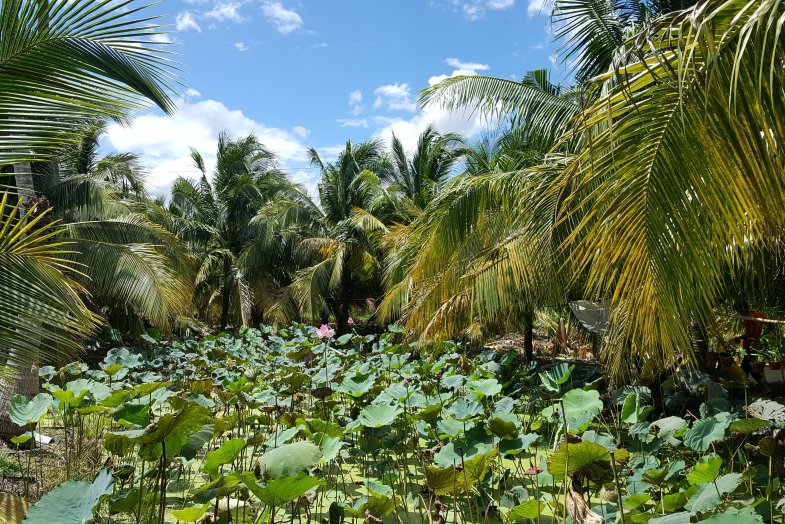 Cuchi Tunnels and Mekong Delta Full Day